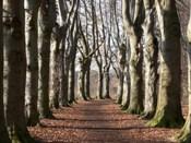 Park van Mesen - beukendreef © Kamiel De Coninck (fotowedstrijd)